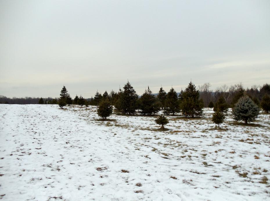 Snowy Virginia Woods