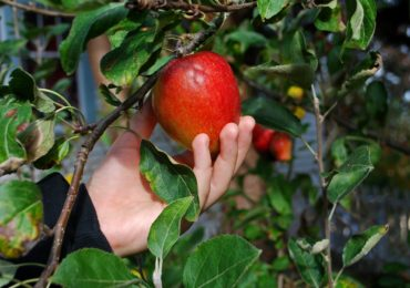 Activity of the Week: Go Apple Picking!