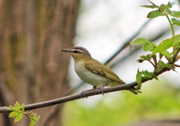 Activity for the Week: Go Bird Watching