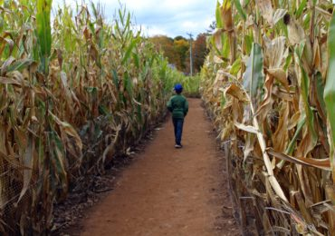 Idea for the Weekend: Get Lost in a Corn Maze