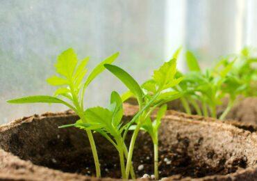 Idea for the Week: Start an Indoor Garden