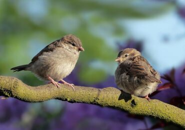 Art of ConservationSongbird Art Contest