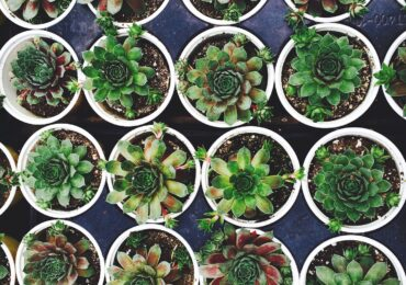 Growing Your Own Succulents