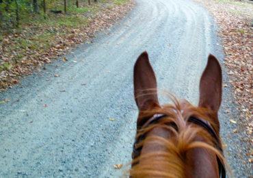 Idea for the Weekend: Go Horseback Riding