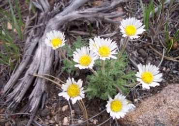 Activity of the Week: Identify Wildflowers