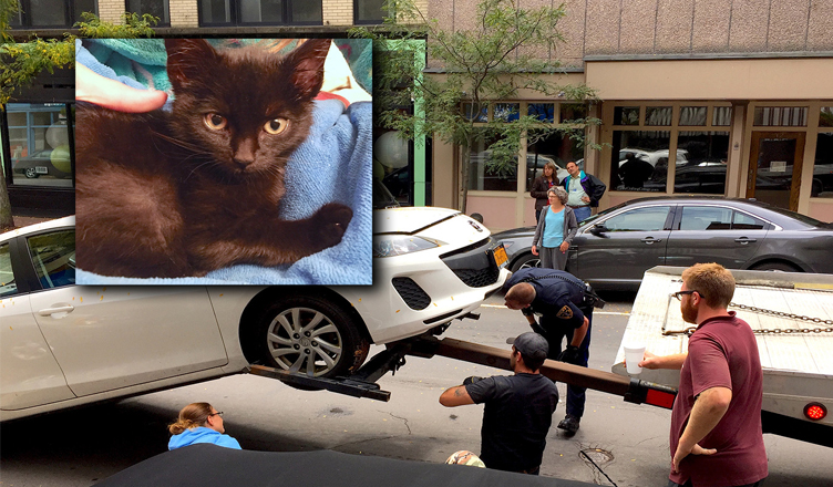 The Kitten That Brought Market Street to Its Knees