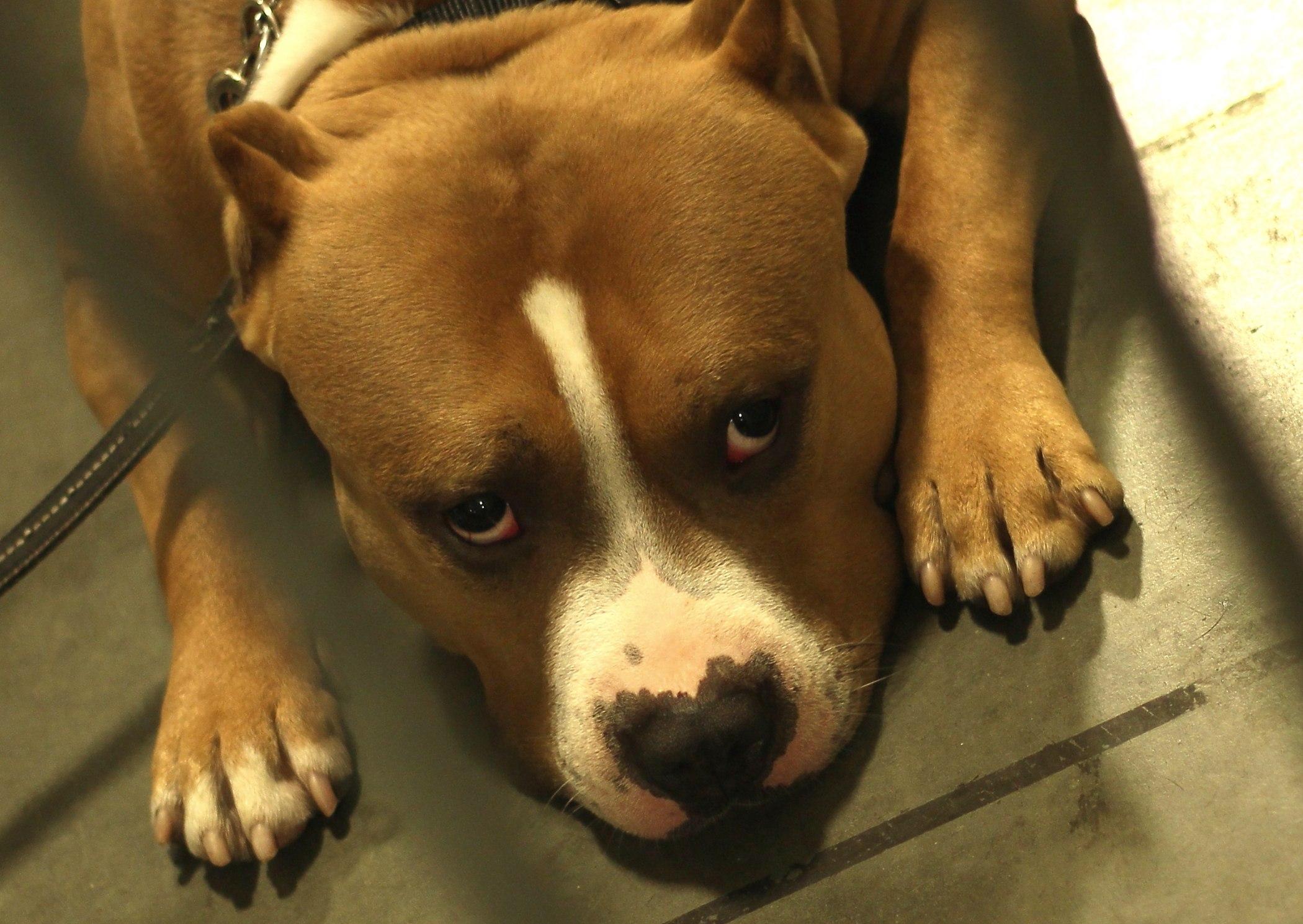 #senatelife_Senatedjs_Dogshow_Life_Of_a_Senatdj_2100 × 1489