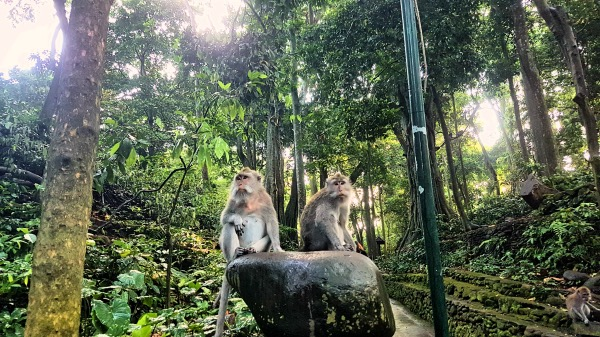 Monkeys at Ubud Monkey Forest - Detailed Guide to Ubud