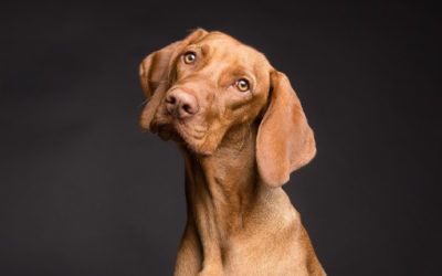 Is Chiropractic Treatment Right For Your Dog?