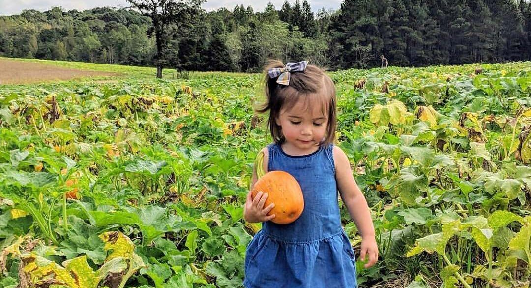 Pumpkin Patch at Carrigan Farms