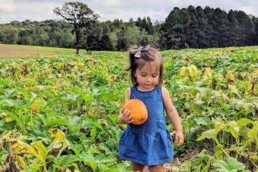 Pumpkin Patch at Carrigan Farms