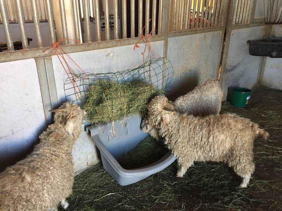 Hay Feeders:  A low cost solution to decreasing hay waste