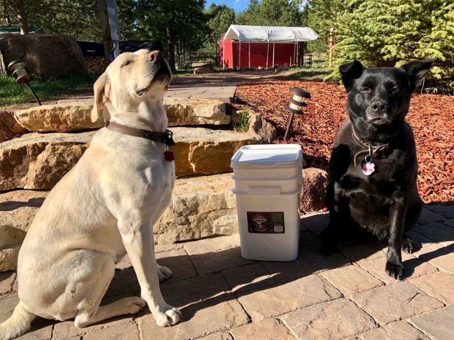 Yellow lab and black dog sitting outside next to a bucket of seasoning