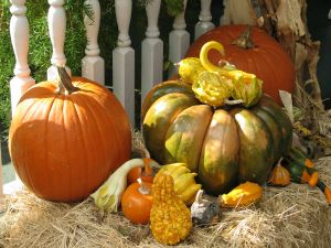 autumn tableau