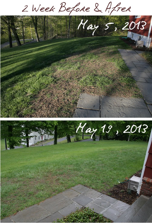 lawn before and after 2 weeks