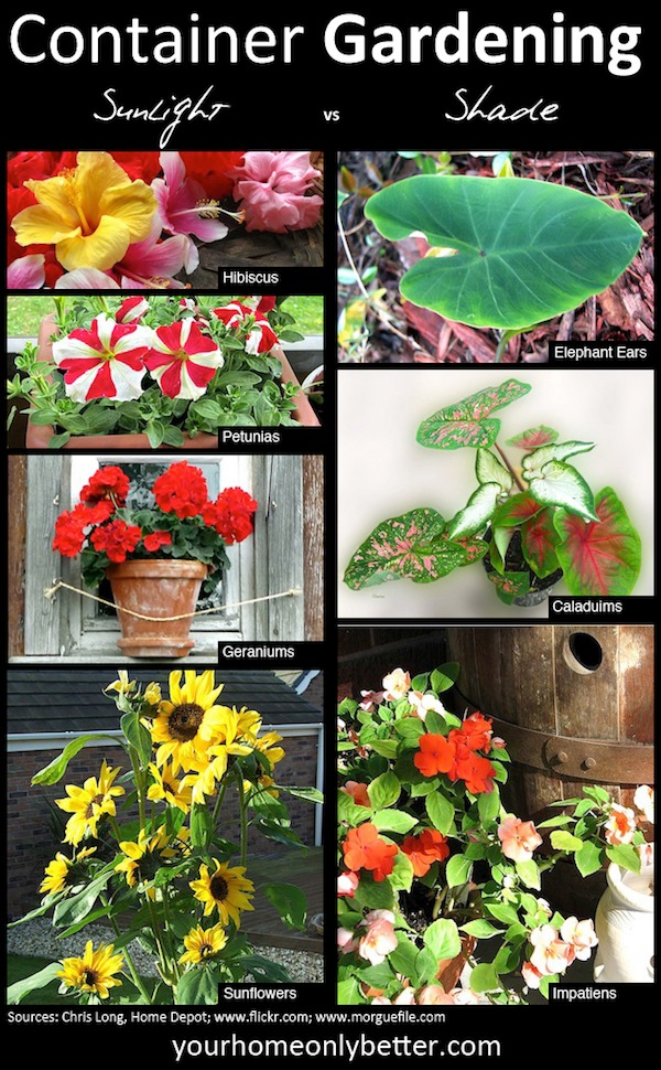 Creative Container Gardens you can be Proud Of!