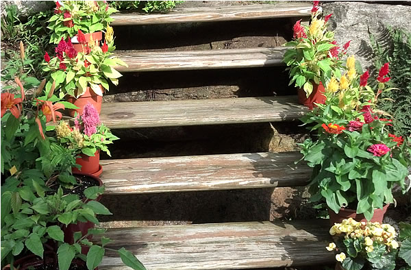 flower container garden on wood steps