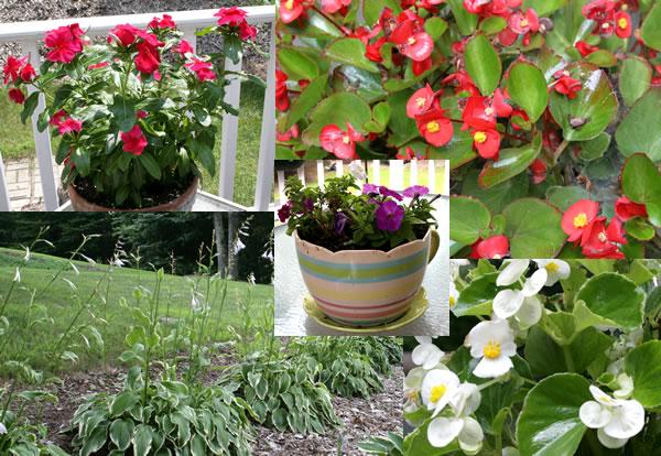 neighbors flowers