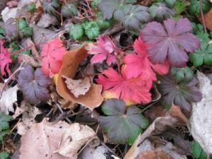 fall leaves pink purple green