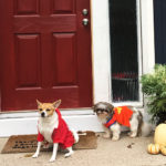 7 Cheap and Easy Fall Decor Ideas for Halloween and Beyond
