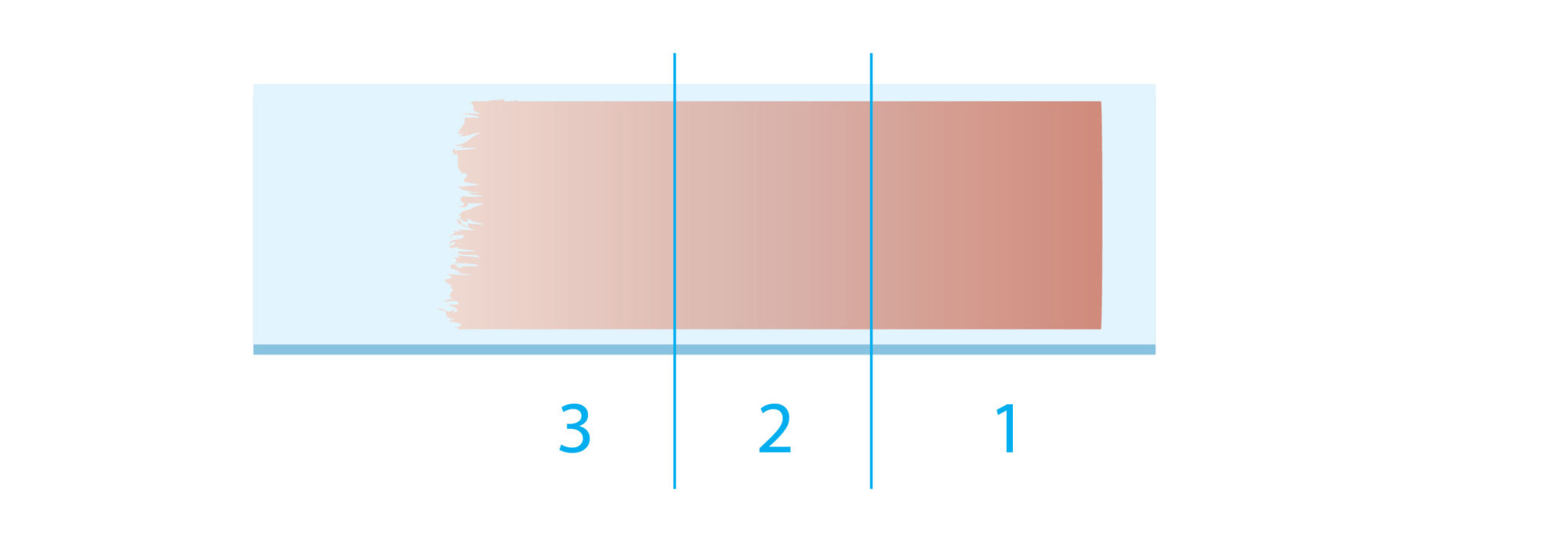 Lâmina Microscopia: 1 - Cabeça, 2 - Corpo e 3 - Cauda
