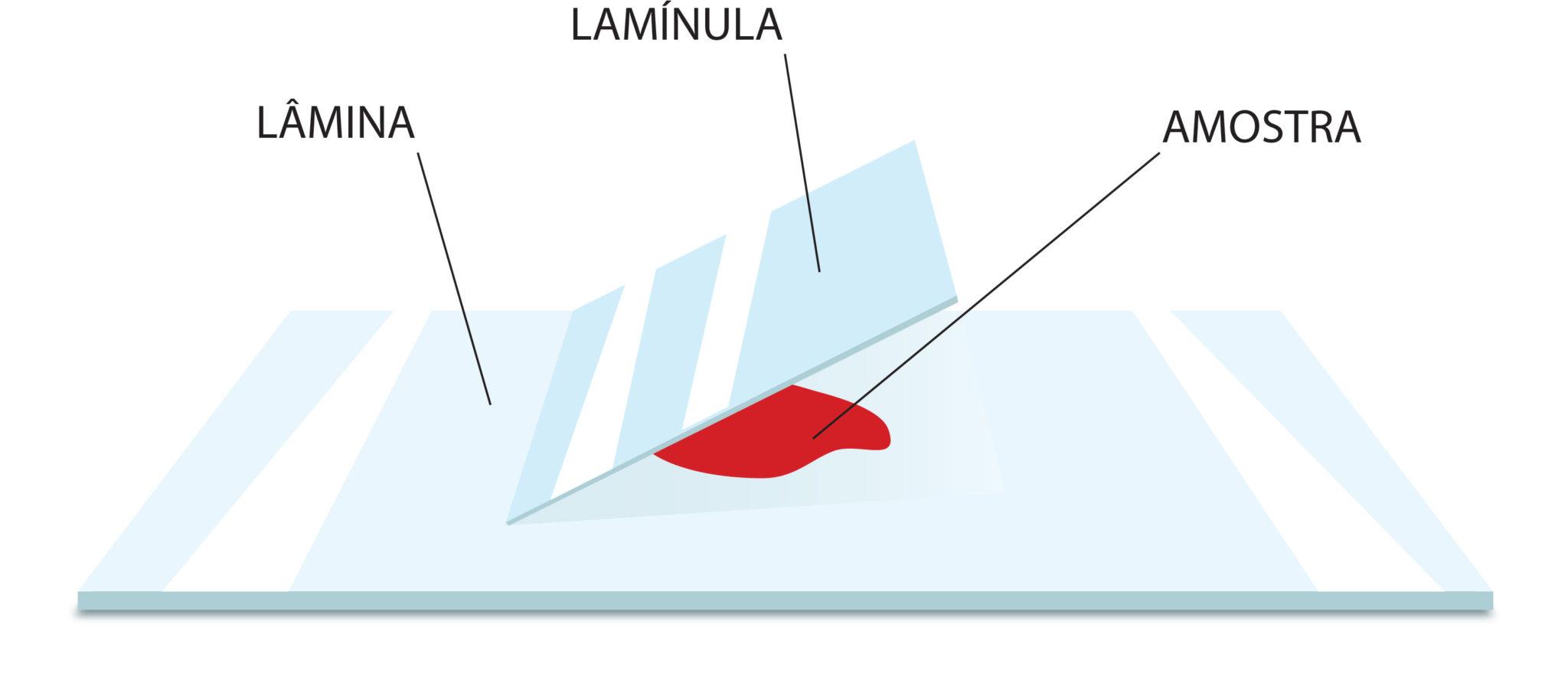 Esquema Lâmina, Lamínula e amostra