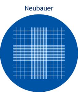 Câmara de contagem - Neubauer