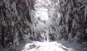Personne qui marche dans la forêt eneigée