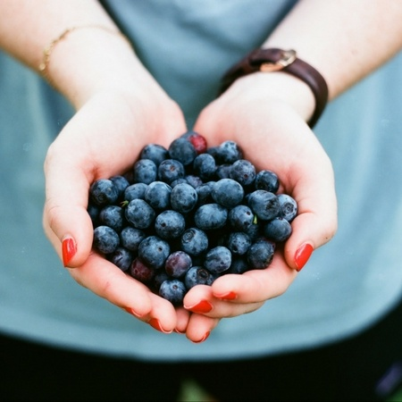 Blueberries in Cupped Hands