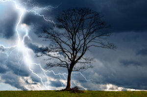 photo of a tree with lightning and a storm all around