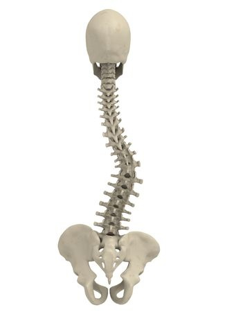 chiropractor scoliosis