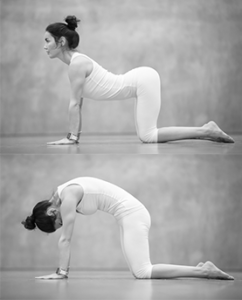 Cat & Camel Pilates stretch for scoliosis treatment in Denver Colorado