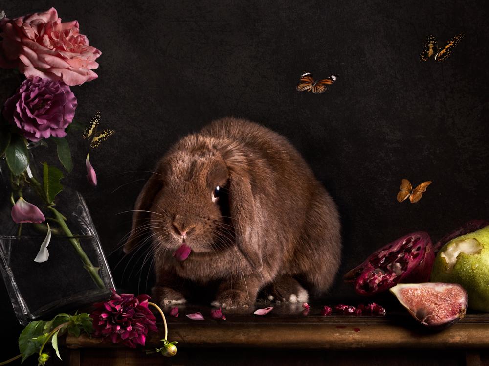 Rabbit destroying a still life scene