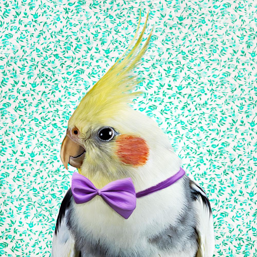 Cockateil wearing a purple bowtie