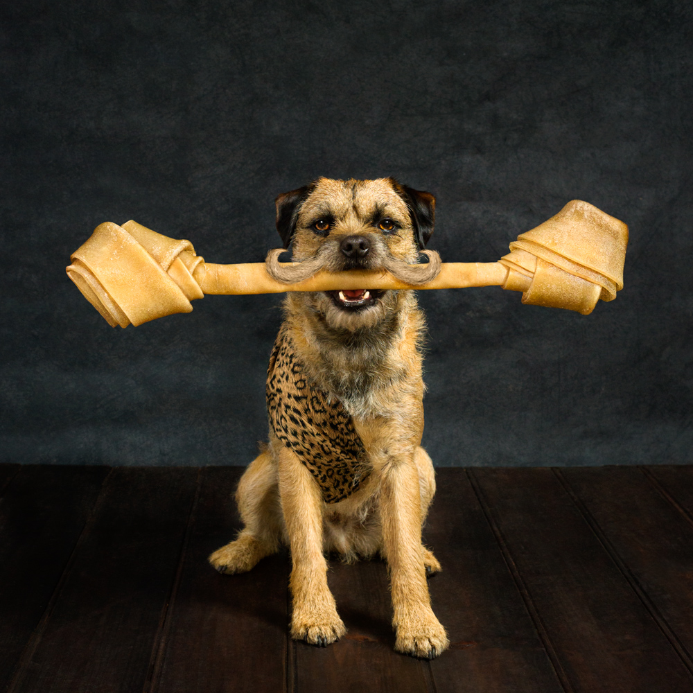 Terrier dressed in strongman costume and holding a big bone in mouth