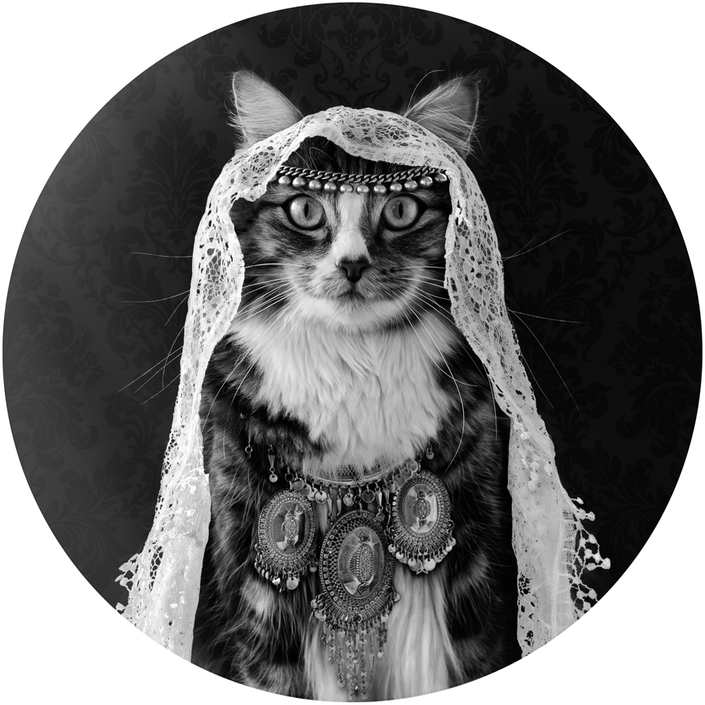 Tabby Cat wearing a white veil and a ethnic silver necklace