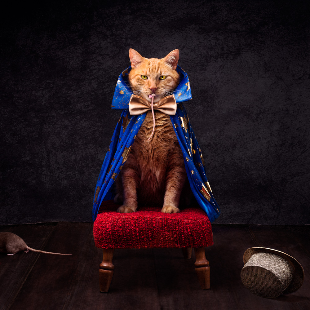 A orange cat dressed in a gold bowtie and blue cape with a rat in its mouth