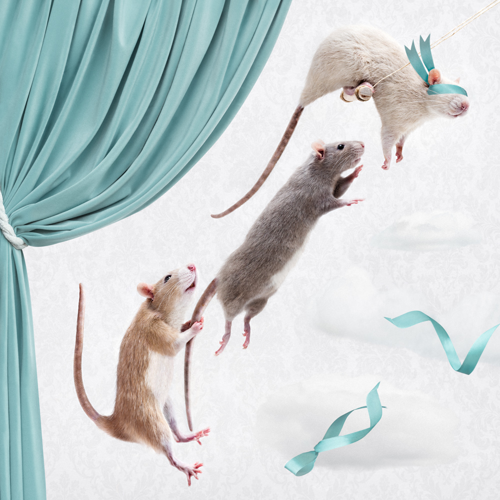 Three rats flying through the air as trapeze artists