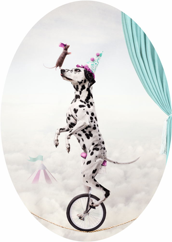 A Dalmation riding a unicycle on a tightrope with a rat balancing on his nose