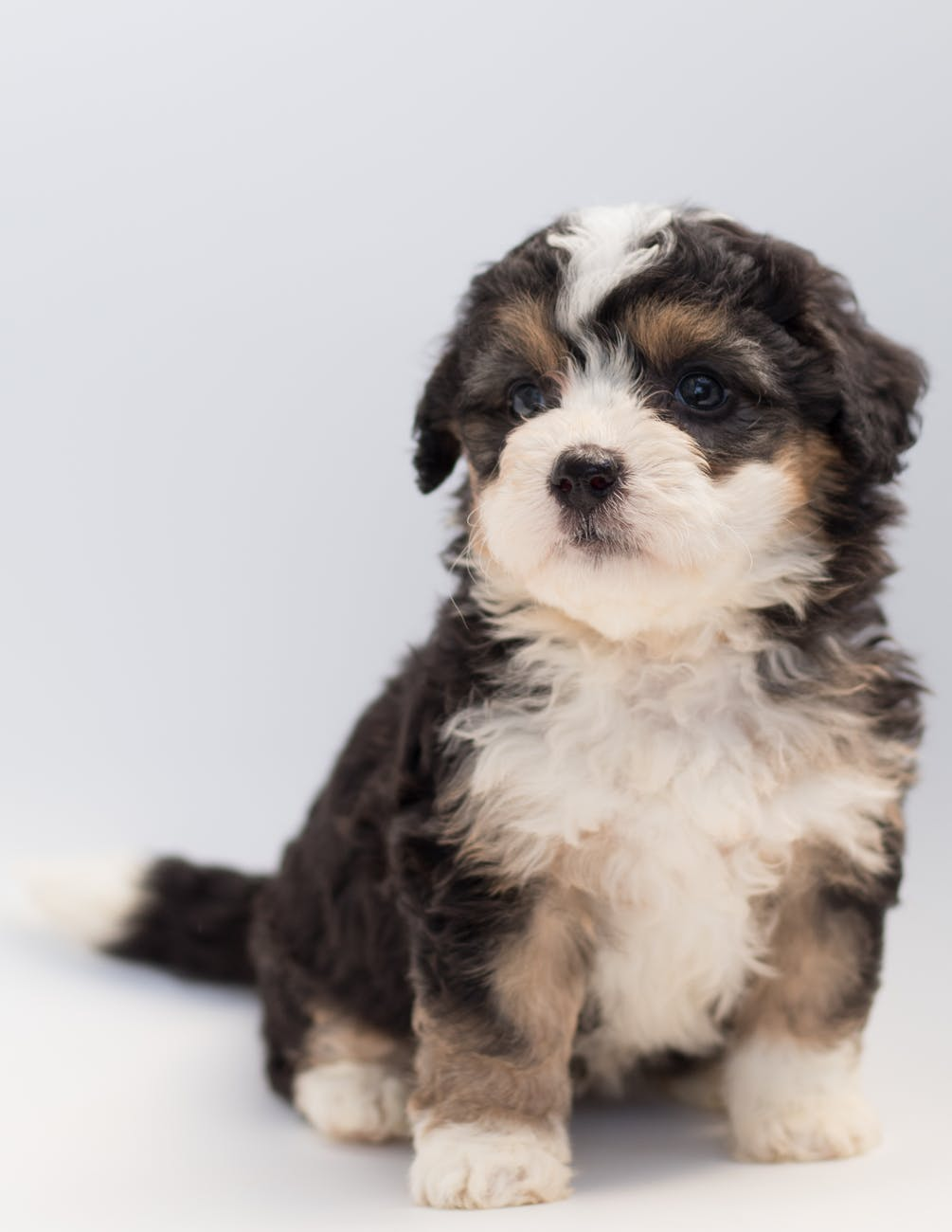 Puppy Care At Grant Animal Clinic