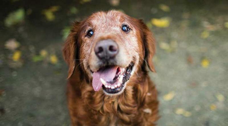 Dog Senior Care at Grant Animal Clinic