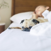 health-summer-heat-bed-dog-pug-tips-sleep-testing-study-apnea-snoring-amerisleep-treatment-diagnostics
