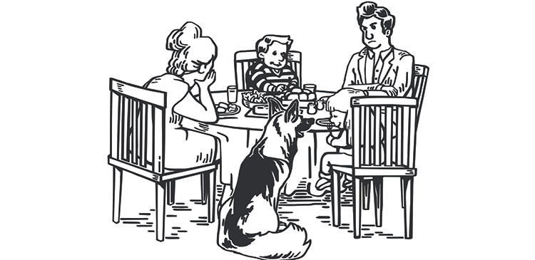 Feed the Dog header