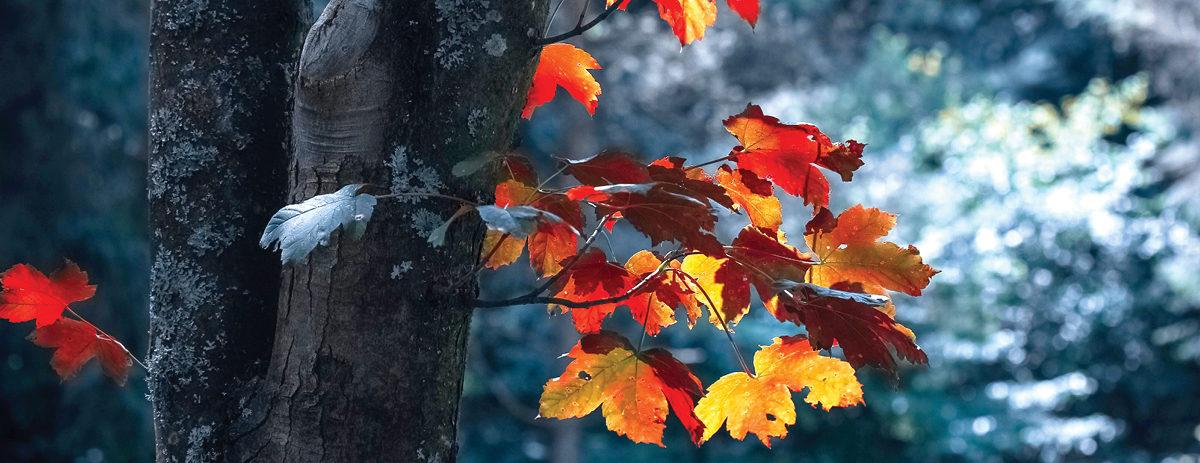 Slide 3 – Autumn