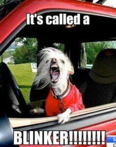 Road Rage Dog