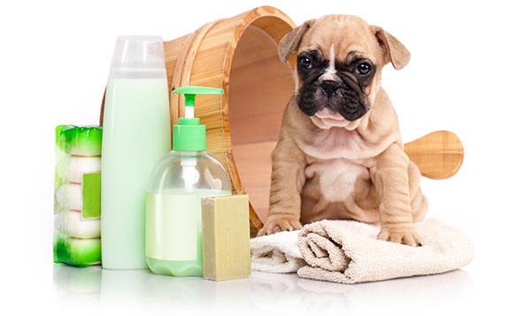 Affordable dog daycare
