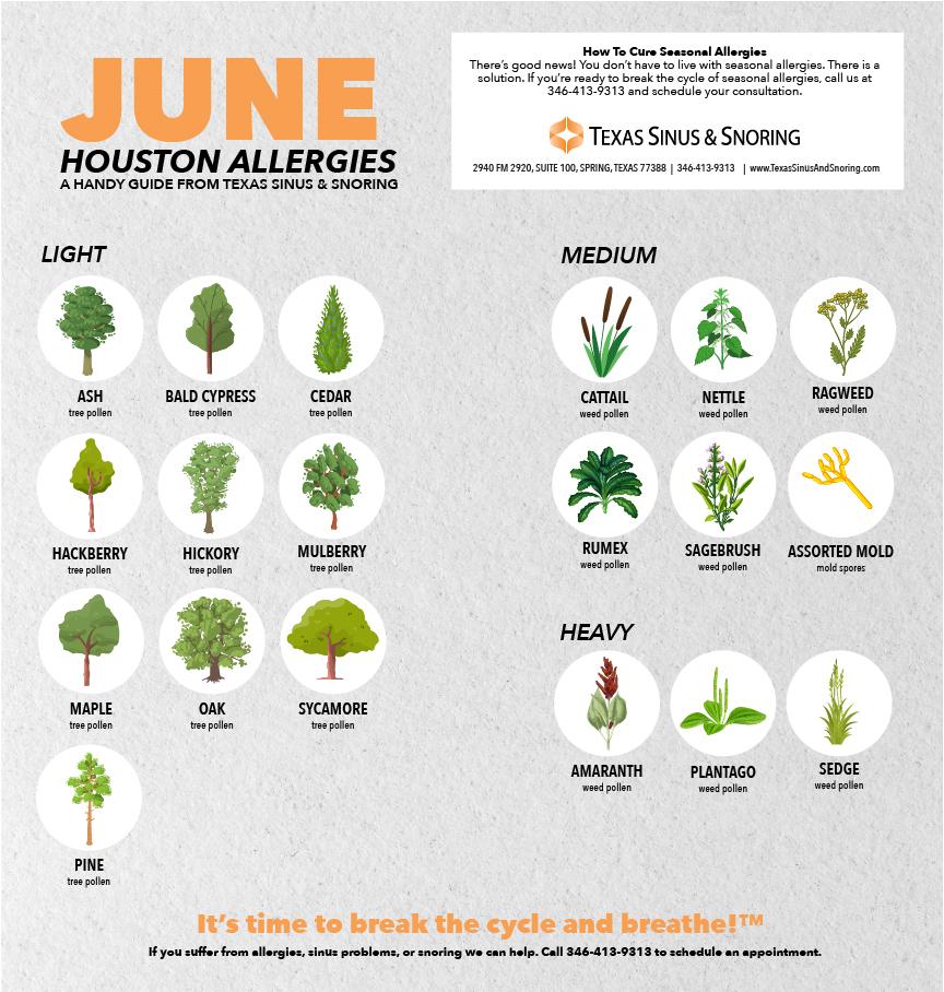 June Allergies in Houston