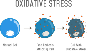 the effects of oxidative stress