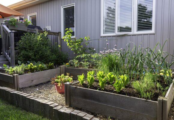 How To Start An Organic Garden