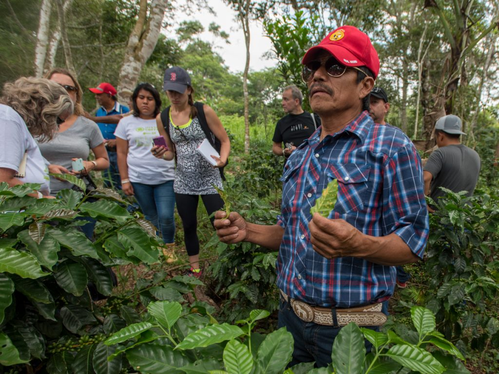 Productores de café de  San Fernando, Chiapas.